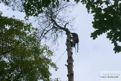 Alpinisms Tree Climbers, SIA